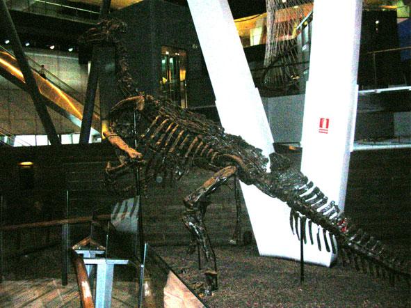1 iguanodon