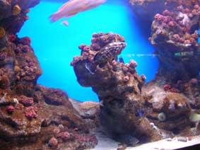 El aquarium cumple 10 años y he ido a visitarlo